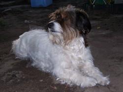 Georgette, chien