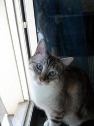 Georgio, chat Européen
