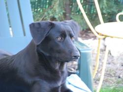 Gessy, chien