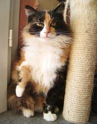 Ghanouche, chat Gouttière