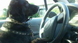 Ghismo, chien