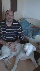 Ghost, chien Dogue argentin