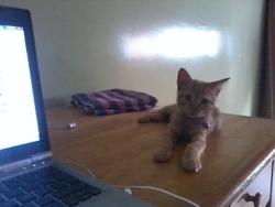 Ghzala, chat Gouttière