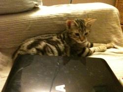 Gibbsy, chat Gouttière