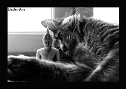 Gibson, chat Maine Coon
