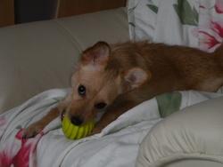 Gigi, chien