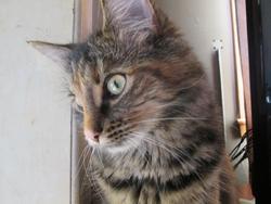 Ginger, chat Gouttière