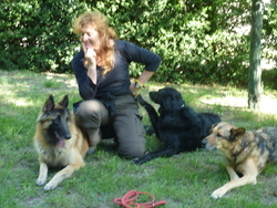 Gingko, chien Berger belge