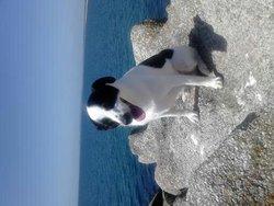Gino, chien