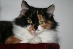 Gipsy, chat Gouttière