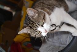 Gismo, chat Gouttière