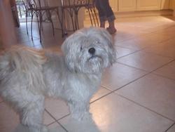 Gizmo, chien