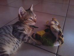 Gizmo, chat Gouttière