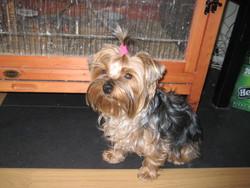 Gladys, chien