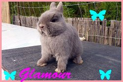 Glamour, rongeur Lapin