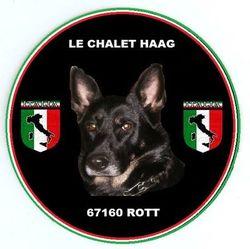 Glinka, chien Berger allemand
