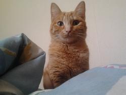 Globule, chat Gouttière
