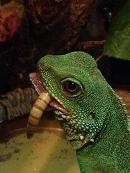 Godzilla, autres
