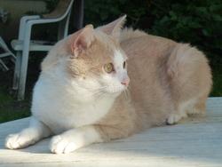 Goldy, chat Gouttière