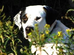 Gorka, chien