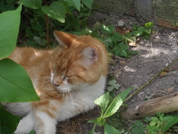 Gourmend, chat