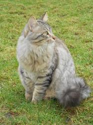 Grabouillon, chat