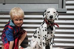Grace, chien Dalmatien