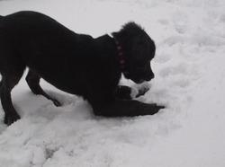 Gracie, chien