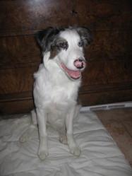 Grant De L'Arche Des Dieux, chien Border Collie