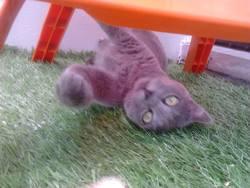 Gratouille, chat