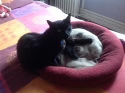 Grelot, chat Gouttière