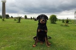 Grenadine, chien Beauceron