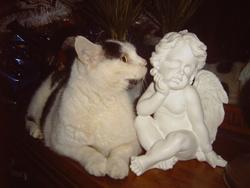 Gribouille A Rejoint Les Anges , chat Gouttière