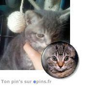 Gribouille, chat