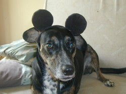 Gribouille, chien