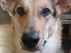 Griffe, chien
