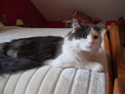 Griffon, chat Gouttière