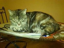 Grignette, chat