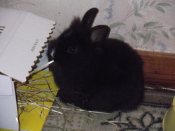 Grignotte, rongeur Lapin