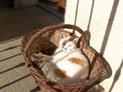 Grignotte, chat Gouttière