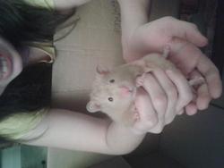 Grigontin, rongeur Hamster