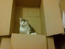 Grimace, chat Gouttière
