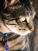 Grinak, chat Gouttière
