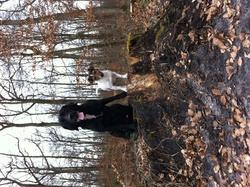 Gringo, chien Labrador Retriever