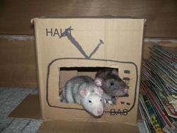 Gripoil Et Monsieur Bu, rongeur Rat