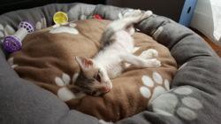 Grippy, chat Gouttière