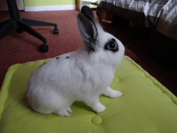 Grippy, rongeur Lapin