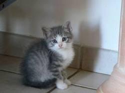 Gripssou, chat