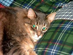 Griselle, chat Gouttière