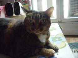 Grisette, chat